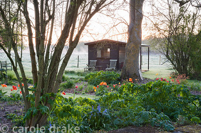Bright tulips and mounds of new herbaceous perennials amongst trees with summerhouse and views to surrounding fields beyond. ...
