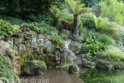 Small pond is surrounded with foliage planting including tree ferns, pennisetum, ferns, hostas and silvery plectranthus. Hadd...