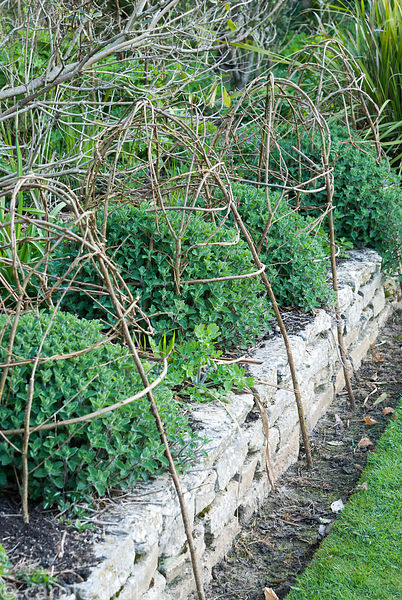 Woven hazel supports for catmint stretch a leg down to ground level on the edge of a raised border. Melplash Court, Bridport,...