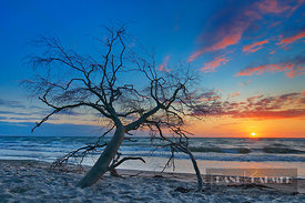 Sunset impression at sea with dead wood - Europe, Germany, Mecklenburg-Vorpommern, Vorpommern-Rügen, Darss, west beach (Natio...