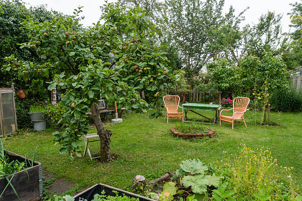 Apples tree with view on sitting area near the fire pit