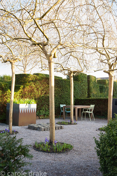 A gravelled courtyard in a formal garden featuring four weeping ash, Fraxinus excelsior 'Pendula', steel and lead container, ...