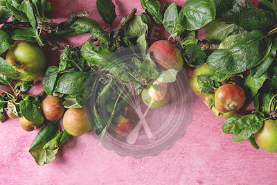Garden apples with leaves
