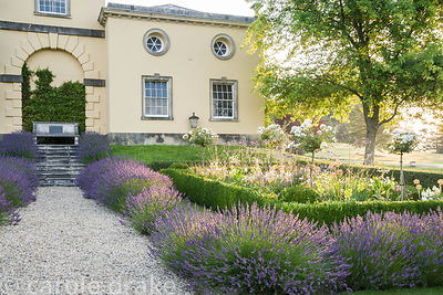 Box edged beds at the top of the double summer herbaceous borders designed by Xa Tollemache and edged with Lavandula × interm...