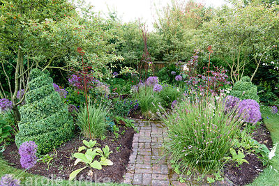 Island bed with clipped box, Allium cristophii, Pennisetum 'Red Buttons' and roses at Malthouse Farm, Hassocks, Sussex