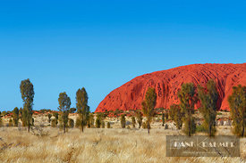 Ayers Rock with desert oaks - Australia, Australia, Northern Territories, Uluru-Kata-Tjuta National Park, Ayers Rock (Red Cen...