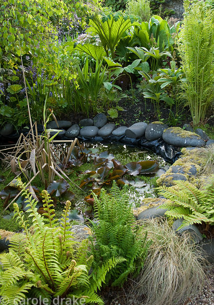 Small pond in the end section of the 250' long garden surrounded by ferns including Osmunda regalis and Carex 'Frosted Curls'...