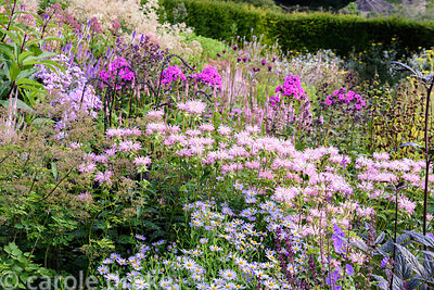Monarda 'Fishes' amongst actaea, pink phlox and eupatorium at Dove Cottage Nursery & Garden, Halifax, West Yorkshire