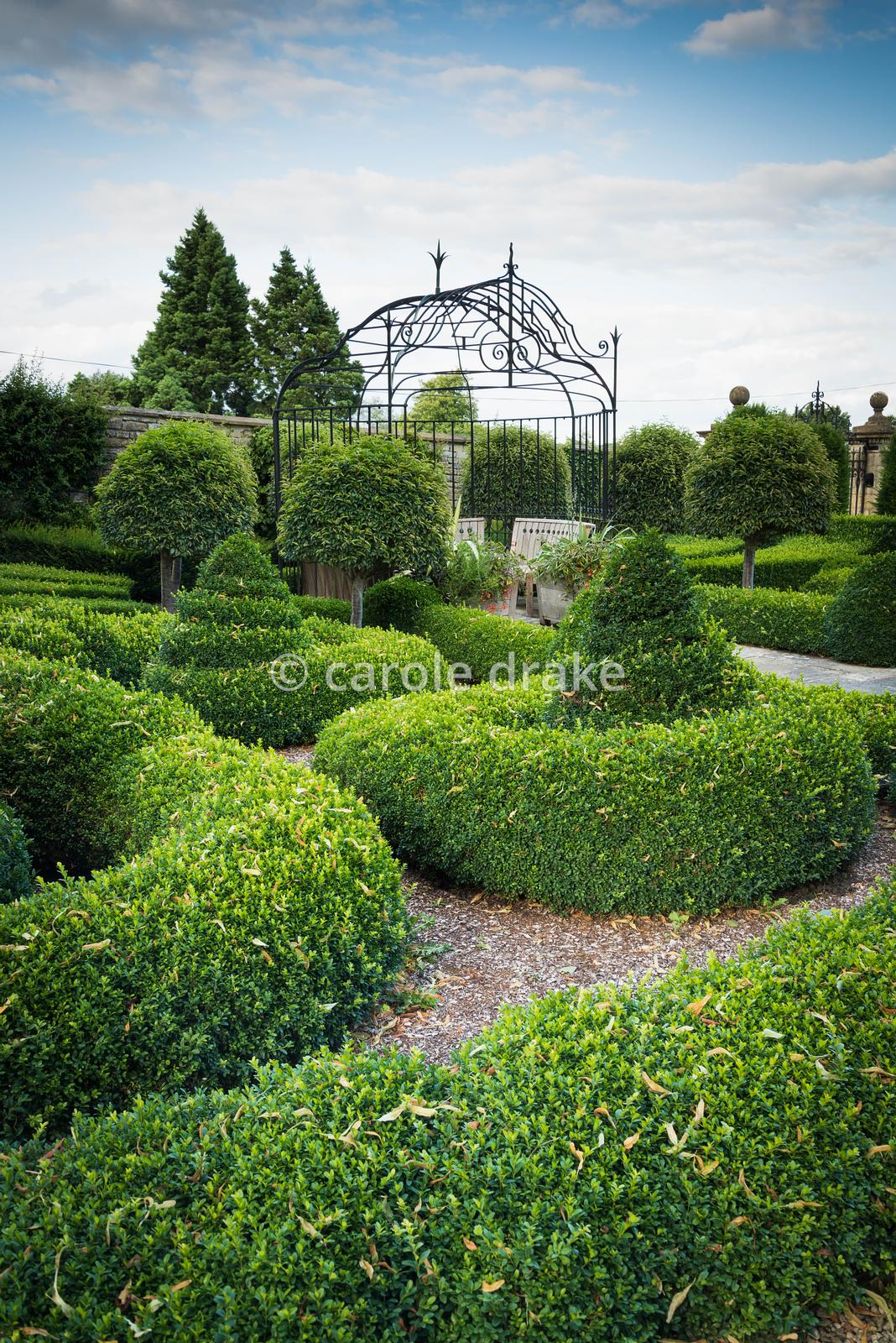 Parterre at Bourton House, Moreton-in-Marsh in August with clipped box and standard Portugese laurels.