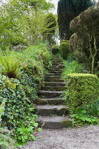 Stone steps lead up the side of the sloping garden, with ivy and fern covered wall on one side and clipped box, shrubs and tr...