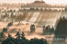 Fog impression at Sindelbachfilz - Europe, Germany, Bavaria, Upper Bavaria, Bad Tölz-Wolfratshausen, Kochel, Großweil (Alps, ...