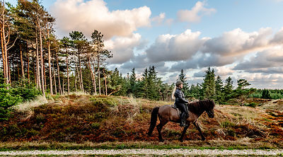 Danish woman riding horse in Thy woods, Denmark 28