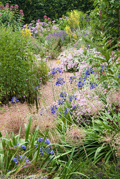 Path through stone garden passes pink Saponaria x lempergii 'Max Frei' mixed with seedheads of Allium cristophii, silvery Ery...