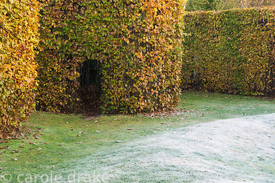 Opening into a hornbeam hedge in designer Brita von Schoenaich's walled garden at Marks Hall in autumn