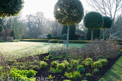 Herbaceous borders on each side of the croquet lawn feature standard holm oaks, Quercus ilex, underplanted with Crambe cordif...