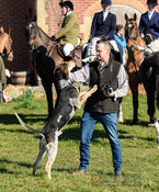 A hound welcome at the meet. The Cottesmore Hunt at Ladywood Lodge
