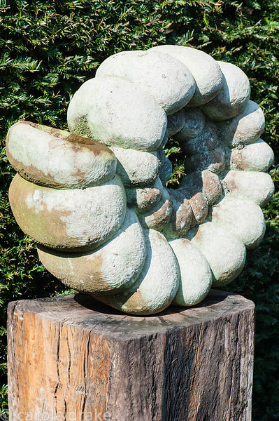 Ammonite sculpture by Darren Yeadon on a rough wooden plinth.