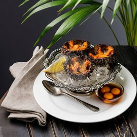 Fresh opened Sea Urchins on ice in silver bowl with quail egg and soy sauce on black wooden table