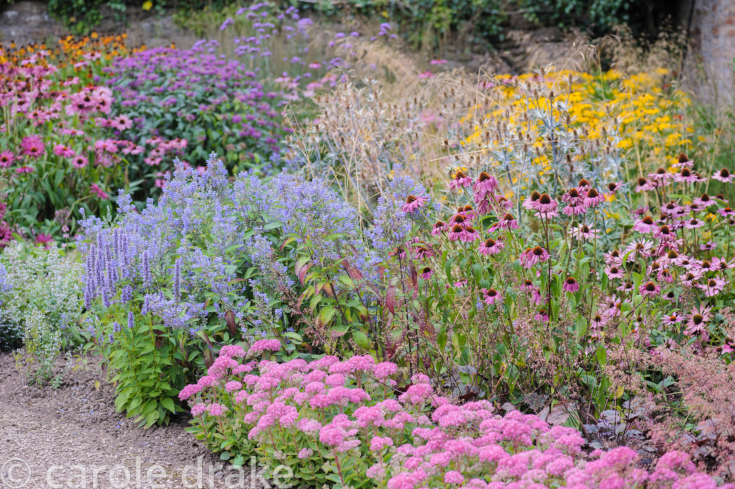 Late summer border planted with echinaceas, sedums, agastaches, heleniums and grasses in the Garden of Reflection at the Bish...