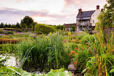 Pond in the gravel garden surrounded by bulrushes, Verbena bonariensis, day lilies and Carex pendula in June at the Yeo Valle...