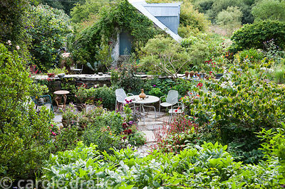 Seating area in the front garden is surrounded by pots of dahlias, persicaria and salvias. Dyffryn Fernant, Fishguard, Pembro...
