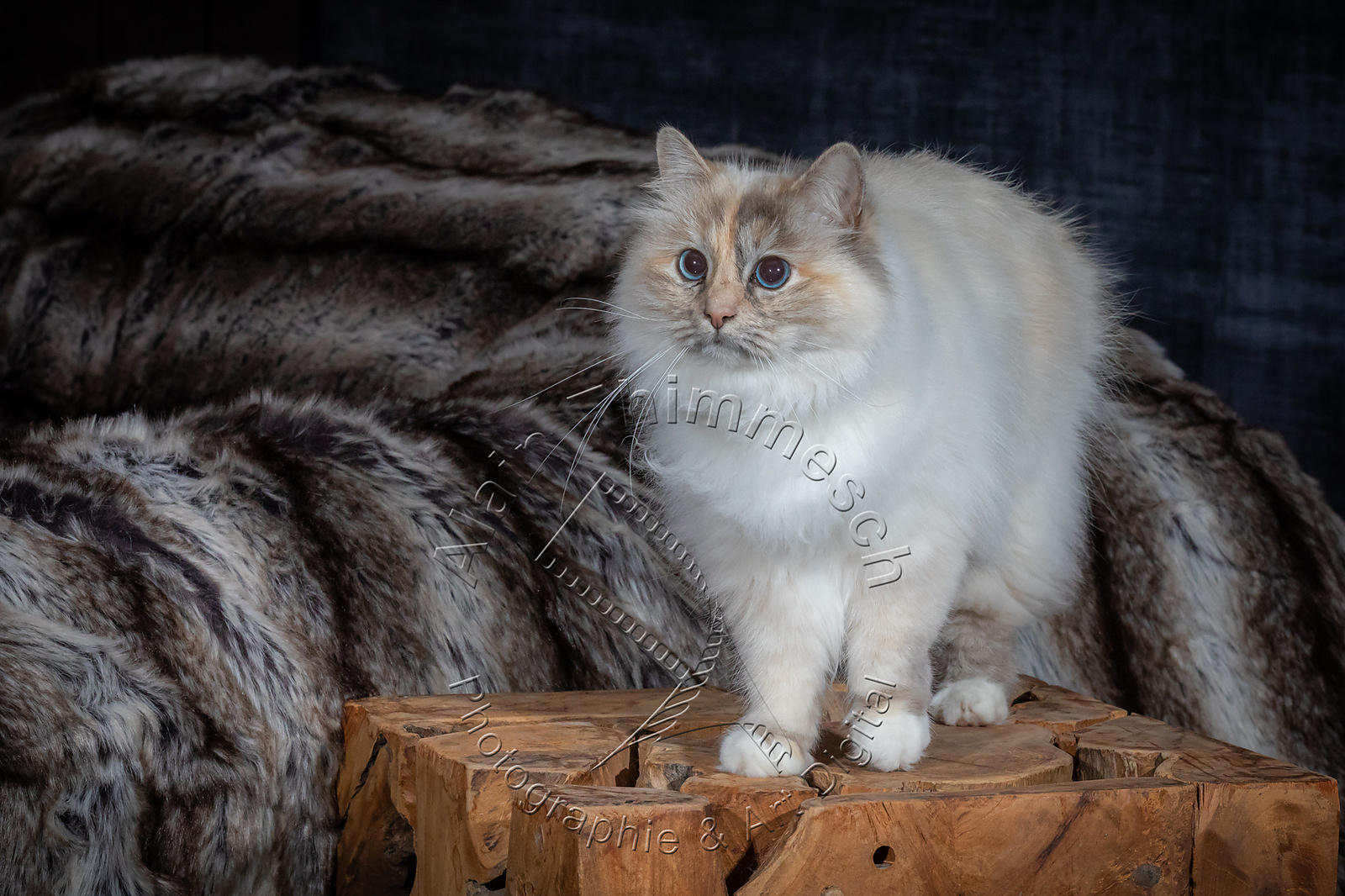 Photographie-Alain-Thimmesch-Chat-1092
