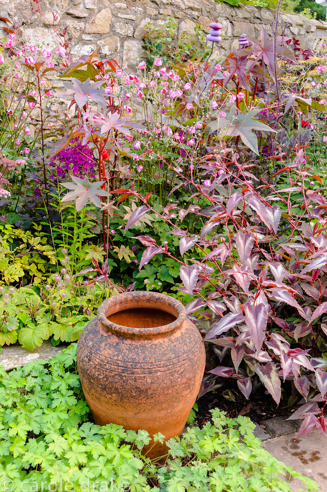 Terracotta urn surrounded by dark purple foliage plants including Persicaria microcephala 'Red Dragon' (PBR) and Ricinus comm...