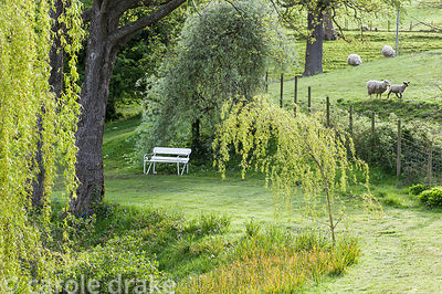 Graceful weeping willow beside a pond in the upper garden, with farmland behind.