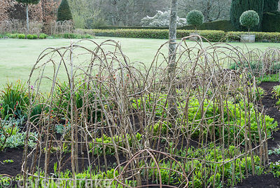Hazel supports are woven in situ on the herbaceous borders that sit each side of the croquet lawn. Melplash Court, Bridport, ...