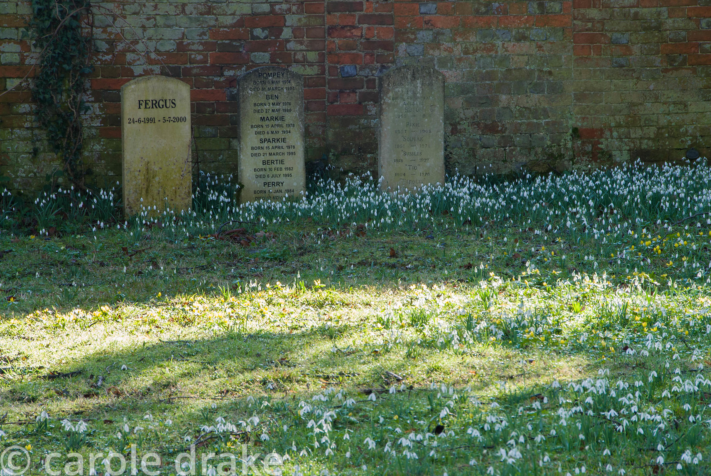 Headstones mark the graves of family dogs, surrounded by snowdrops and aconites. Welford Park, Welford, Newbury, Berkshire, UK