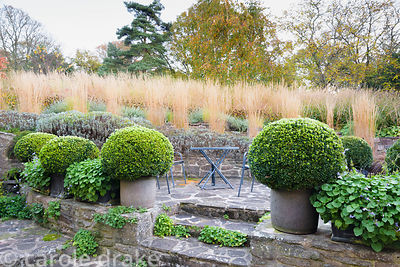 Terraced seating area bordered by pots of clipped box and troughs of campanula at Barn House, Chepstow in October. Behind ter...