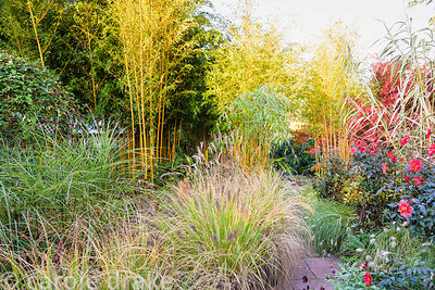Sunken garden with red Dahlia 'Bishop of Llandaff', miscanthus, pennisetums, Phyllostachys aureosulcata f. spectabilis and Ar...