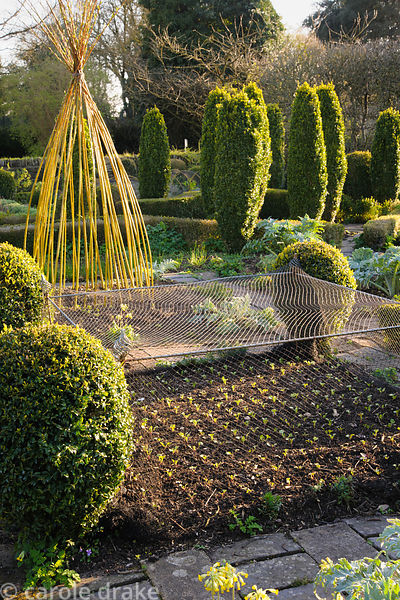 Evening sun illuminates protected seedlings, clipped box and a striking yellow wigwam of willow stems in the potager at Barns...