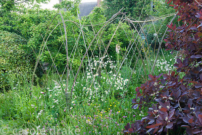 Hazel structure supporting sweet peas with purple leaved Cotinus 'Grace' nearby. Private garden, Dorset, UK