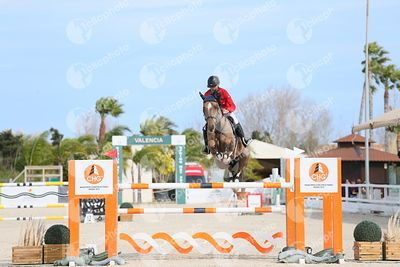 Oliva, Spain - 2021 January 31: CSI2, Gold tour, 1m40 during CSI Mediterranean Equestrian Spring Tour 1.(photo: 1clicphoto)