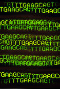 DNA sequence display