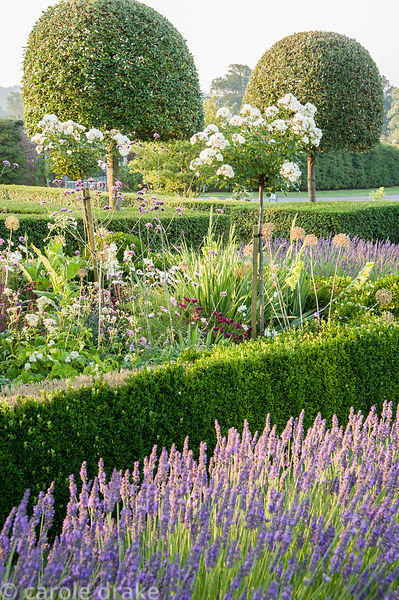 Box edged beds at the top of the double summer herbaceous borders in the Millennium Garden designed by Xa Tollemache and edge...