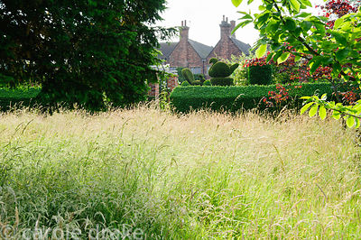 Long meadow grasses with clipped yew hedges and topiary in the formal garden beyond. Felley Priory, Underwood, Notts, UK