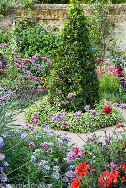 Bay pyramid with ring of variegated sage at base, framed with Verbena bonariensis, Dahlia 'Bishop of Llandaff', verbenas and ...