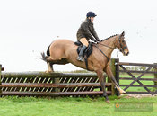 Sophie Osborne jumping a fence at Stone Lodge. The Cottesmore Hunt at Vickers Farm 12/3