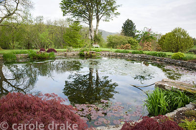 Circular pond near the house edged with deep red acers and moisture loving plants.