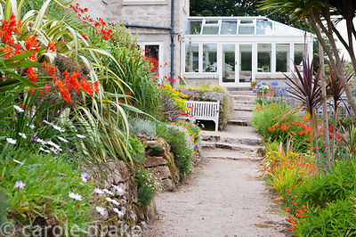Path leading towards the house is framed with phormiums, cordylines, crocosmias, osteospermums and euphorbias.