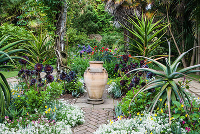 Exotic bedding in the Victorian garden includes succulents such as Aloe ferox, tall Aloe thraskii, and dark aeoniums, mixed w...
