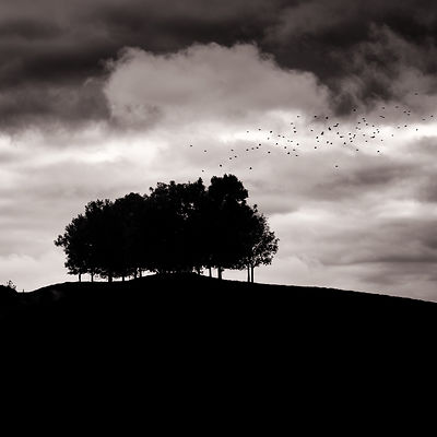 Copse with starlings | Wynford Eagle Dorset | 2015