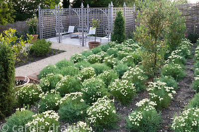 Newly planted Persian garden with screened seating area and formal planting including squares of box and Ilex crenata surroun...