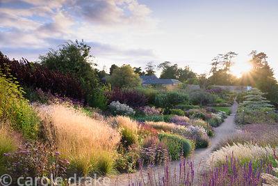 Double herbaceous borders in the walled garden are full of grasses and late season herbaceous perennials that flower long int...