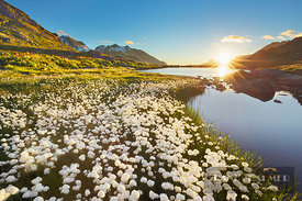 Mountain lake with cottongrass - Europe, Switzerland, Bern, Uri, Sustenpass (Alps, Bernese Alps, Bernese Oberland) - digital