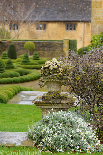 Stone cornucopia on a wall with corokia at Bourton House garden in January