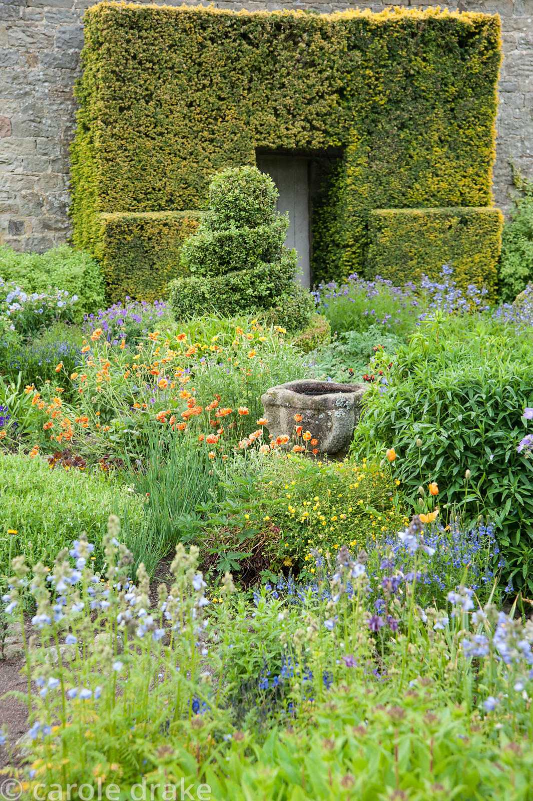 The Flower Garden features strong blocks of box and yew that frame cottage garden plants and flowers including polemoniums, g...