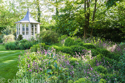 Summerhouse framed by borders planted with yew, self seeded red campion and box, clipped into mounds either side of the path ...